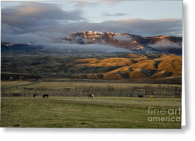 North Fork Pasture-signed Greeting Card