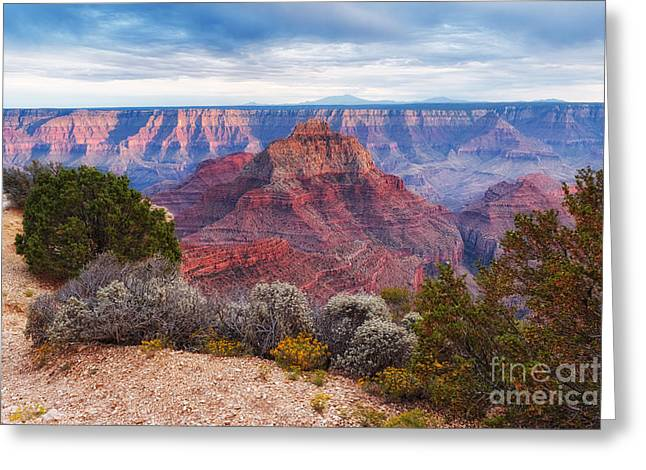 North Rim Grand Canyon Arizona Desert Southwest Solitude At Cape Royal Greeting Card by Silvio Ligutti