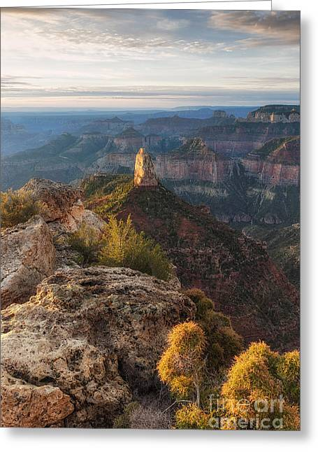 North Rim Grand Canyon Arizona Point Imperial Bathed By Sunrise Golden Light. Greeting Card
