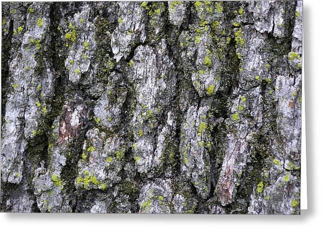North-side Oak Bark Greeting Card