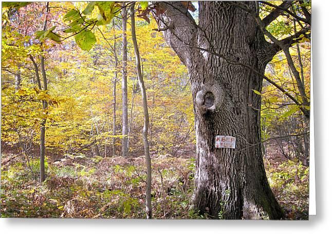 North Woods Guardian Greeting Card by Mary Lee Dereske