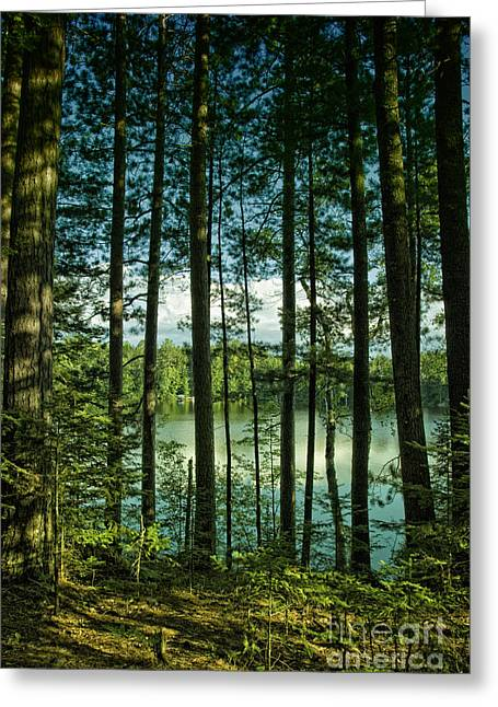 North Woods Lake Greeting Card