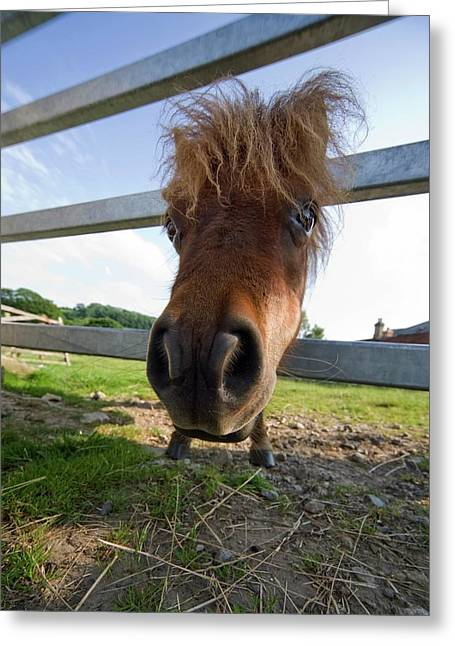 North Yorkshire, England  Horse Looking Greeting Card