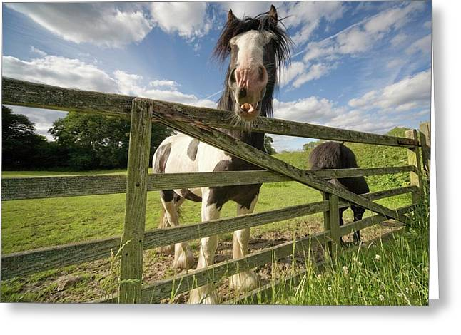 North Yorkshire, England  Horses Greeting Card