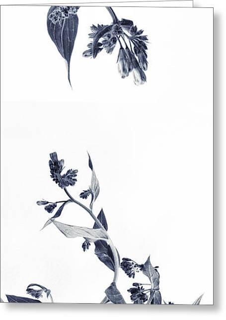 Northern Bluebells Greeting Card by Priska Wettstein