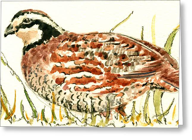 Northern Bobwhite Greeting Card by Juan  Bosco