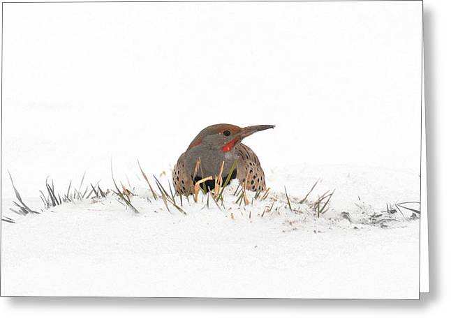 Greeting Card featuring the photograph Northern Flicker by Al  Swasey