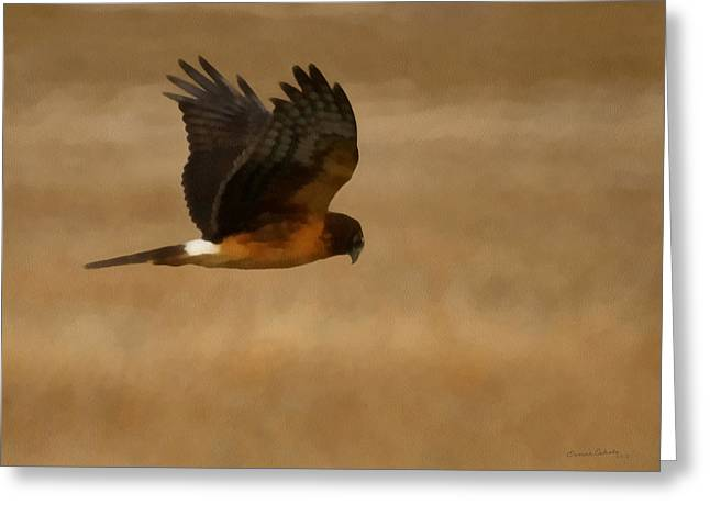 Northern Harrier Painterly Greeting Card