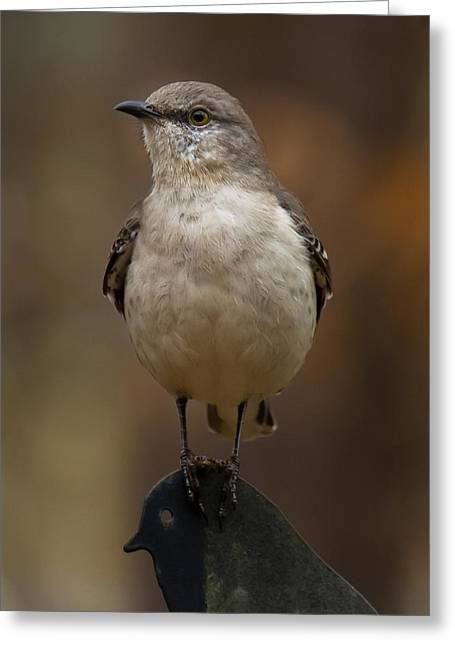 Greeting Card featuring the photograph Northern Mockingbird by Robert L Jackson