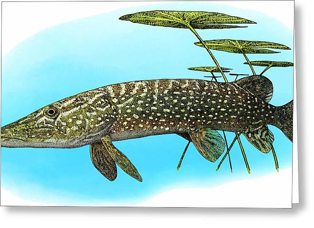 Northern Pike Greeting Card by Roger Hall