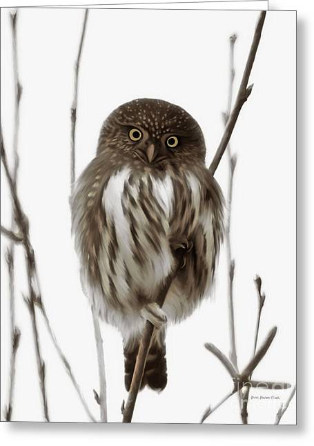 Northern Pygmy Owl - Little One Greeting Card