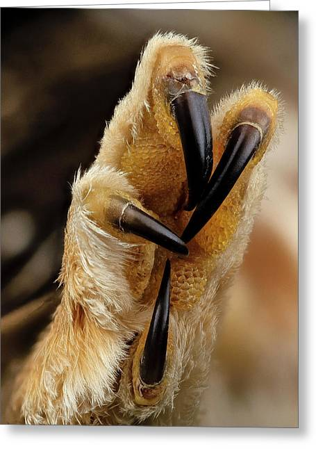 Northern Saw-whet Owl Foot Greeting Card