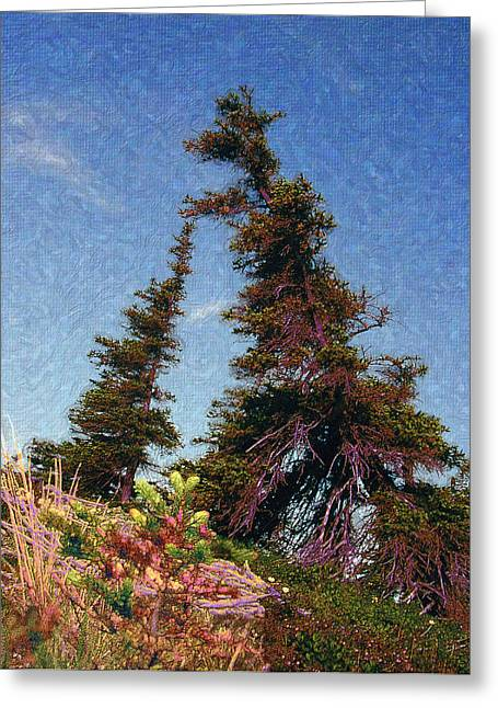 Northern Tree Line #1 Greeting Card
