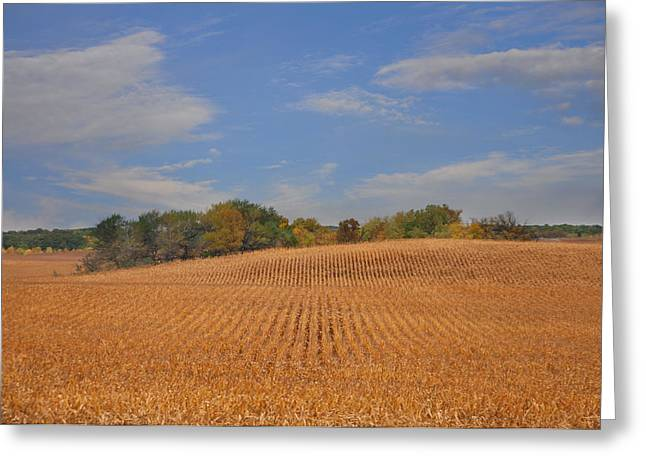 Northwest Iowa Golden Corn Field Greeting Card