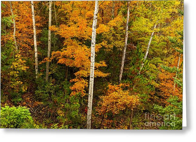 Northwoods Splendor Greeting Card by Teresa A and Preston S Cole Photography