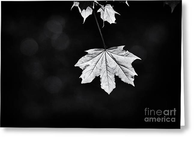 Norway Maple Leaf Monochrome Greeting Card
