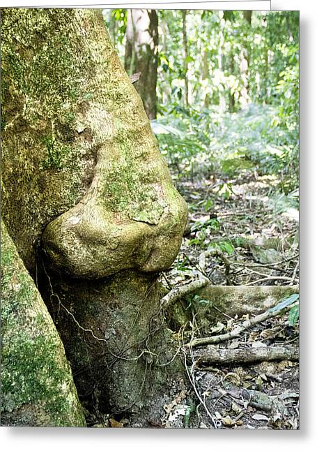 Nose Tree In Gwandanaland Greeting Card by Debbie Cundy