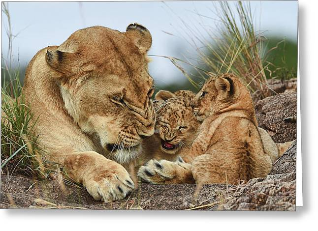 Nostalgia Lioness With Cubs Greeting Card by Aziz Albagshi