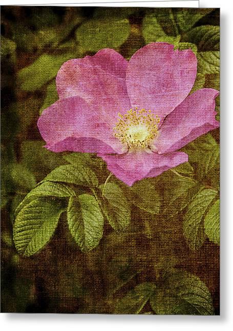 Nostalgic Rose Greeting Card by Karen Stephenson