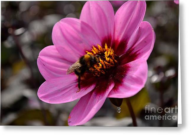 Nosy Bumble Bee Greeting Card by Scott Lyons