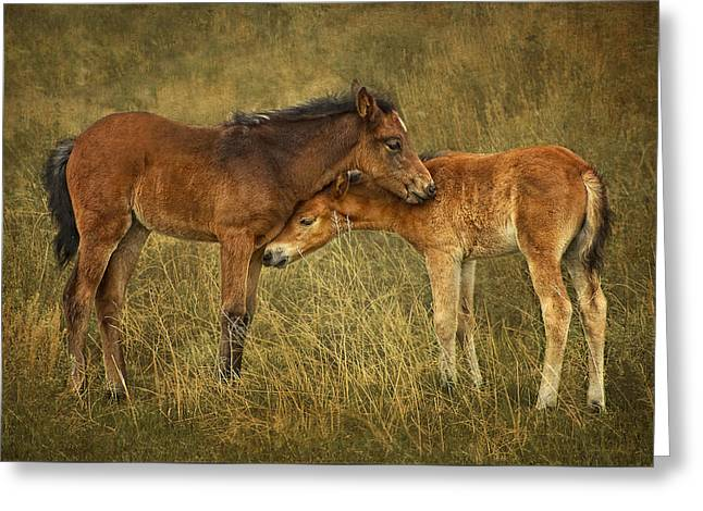 Not So Wild Wild Horses Greeting Card by Priscilla Burgers