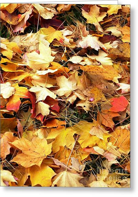 Greeting Card featuring the photograph Nothing But Leaves by Mike Ste Marie