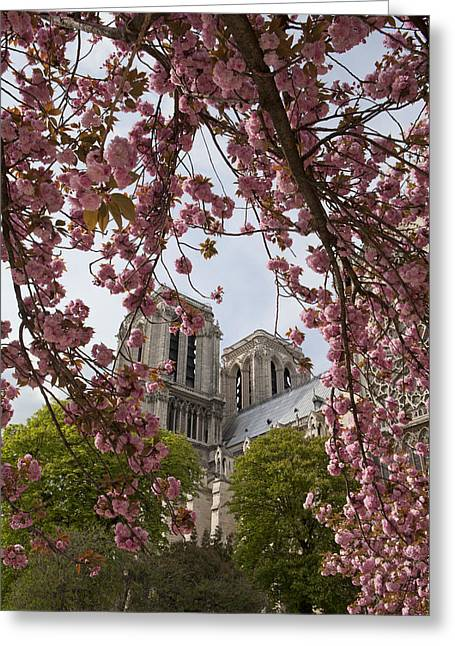 Notre Dame 1 Greeting Card by Art Ferrier