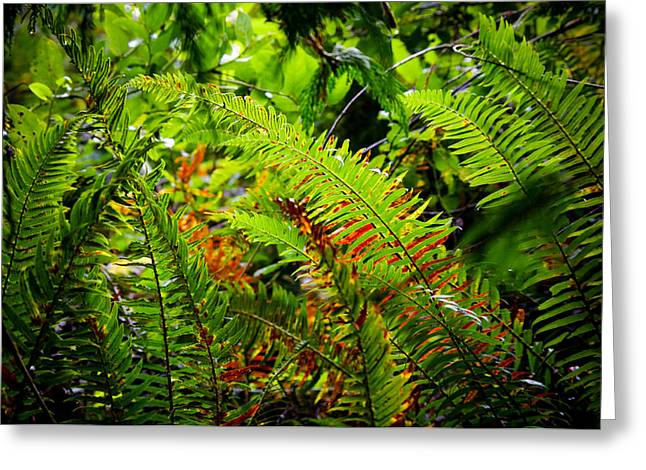 November Ferns Greeting Card by Adria Trail