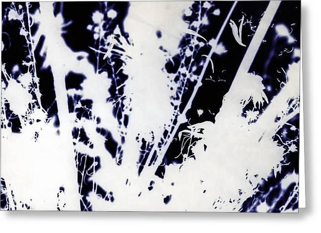 November Flowers Greeting Card by Paul Shefferly
