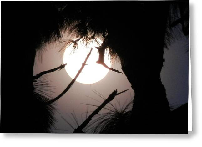 Florida November Full Moon Greeting Card