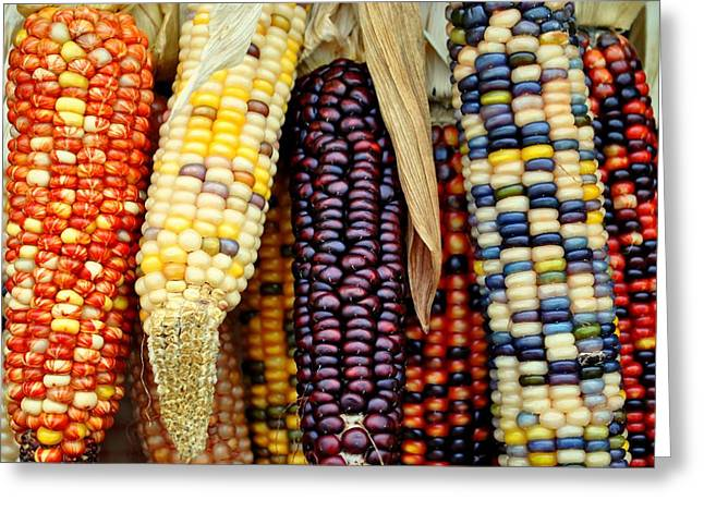 November Harvest Greeting Card by Frozen in Time Fine Art Photography