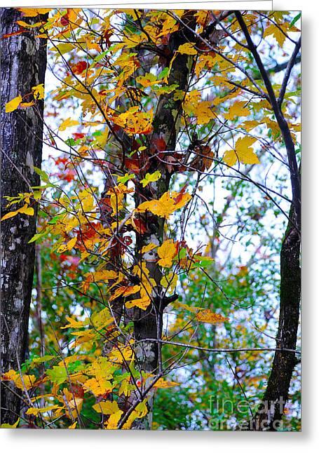November Leaves Greeting Card by Leon Hollins III