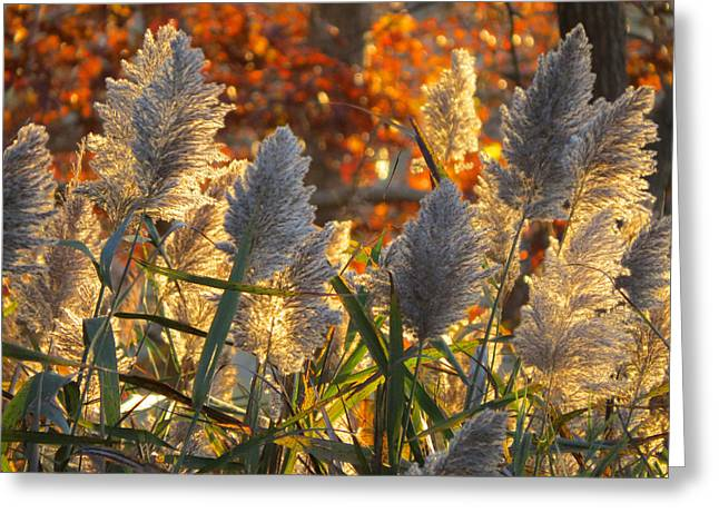 Greeting Card featuring the photograph November Lights by Dianne Cowen