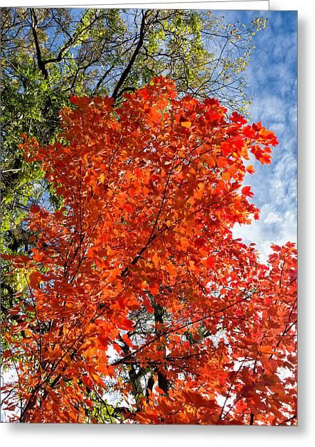 November Maple Greeting Card