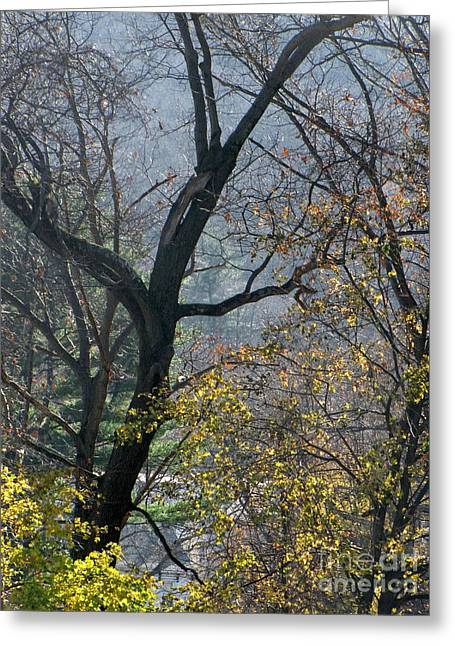 November Morning Greeting Card by Melissa Stoudt