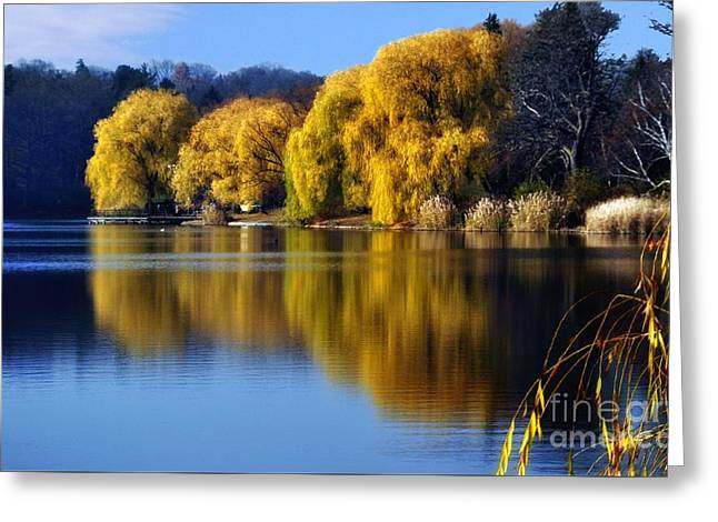Autumn Weeping Willows Greeting Card