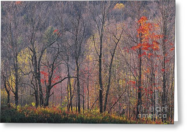 November Woods Greeting Card