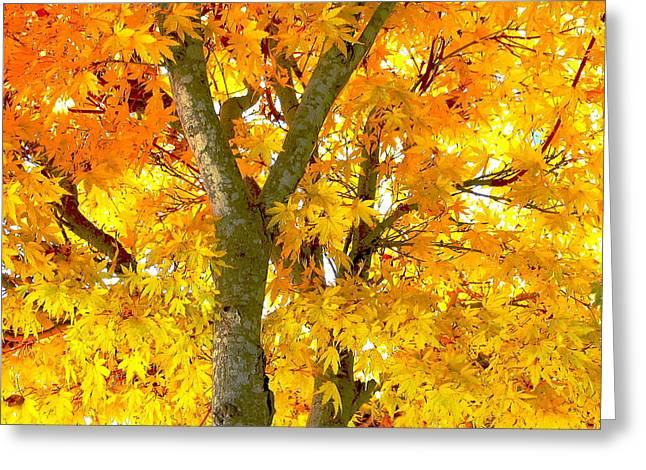 Novemberness Greeting Card