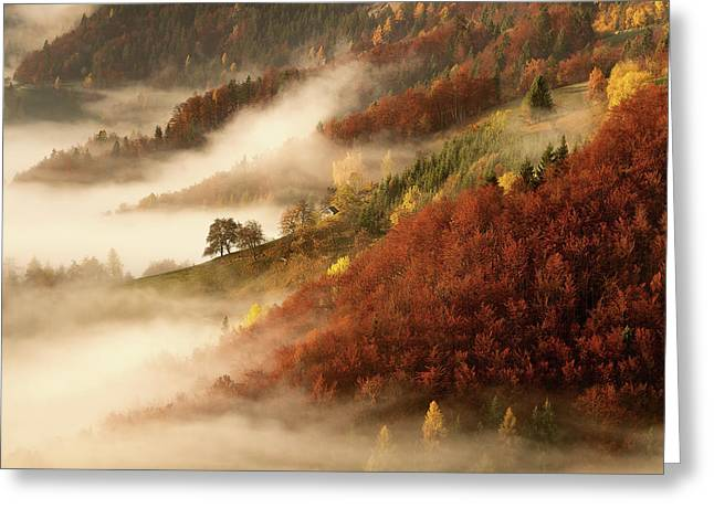 November's Fog Greeting Card