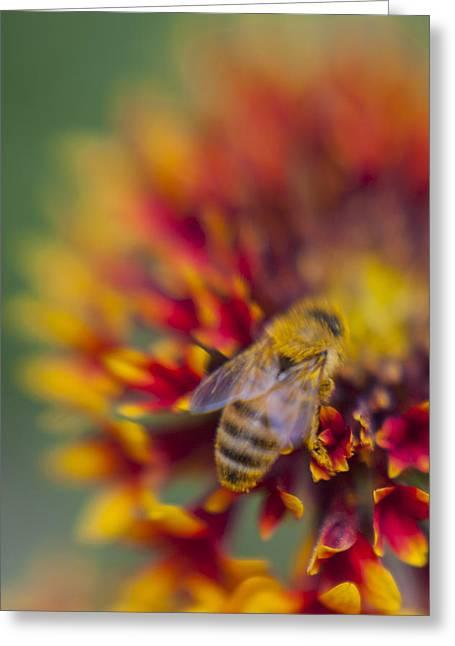 Now Rare Honey Bee 2 Greeting Card