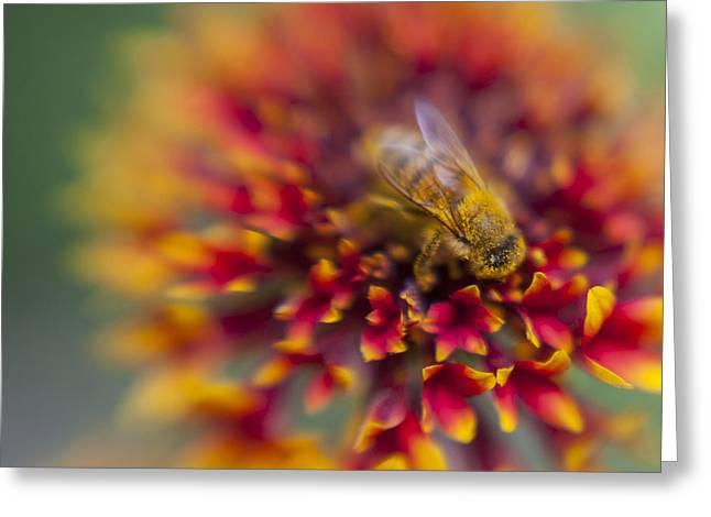 Now Rare Honey Bee 3 Greeting Card