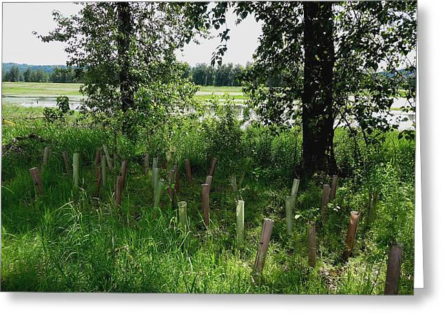 Nurturing Trees To Grow Greeting Card by Lizbeth Bostrom