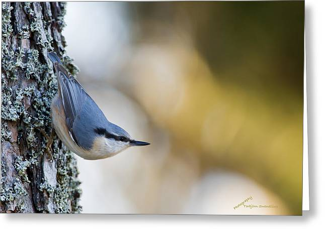 Nuthatch In The Classical Position Greeting Card