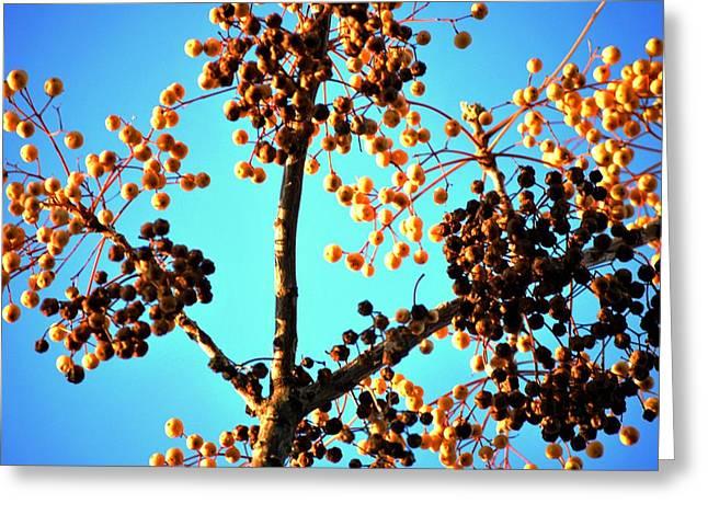 Nuts And Berries Greeting Card by Matt Harang
