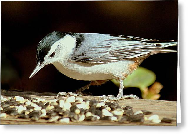 Nuts For The Nuthatch Greeting Card by Rosanne Jordan