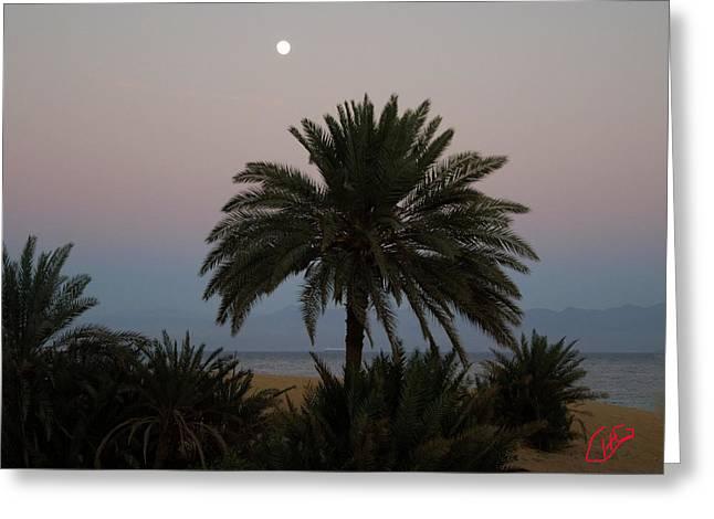 Nuweiba Beach Sinai Egypt Greeting Card by Colette V Hera  Guggenheim