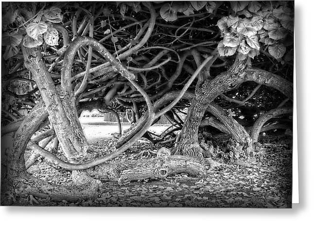 Oahu Ground Vines - Hawaii Greeting Card by Daniel Hagerman
