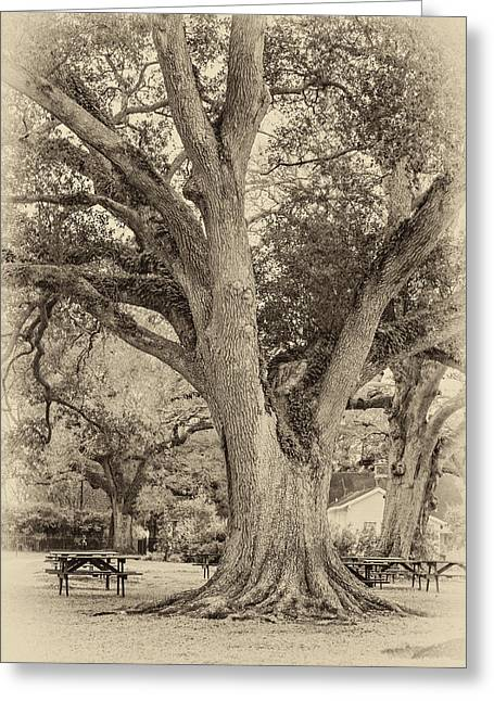 Oak Alley Backyard Seoia Greeting Card by Steve Harrington