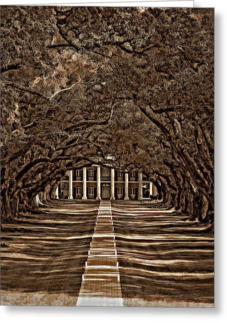 Oak Alley Bw Greeting Card by Steve Harrington
