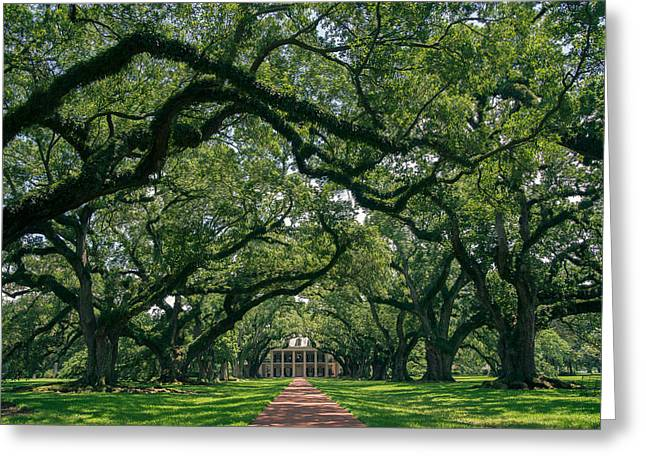 Oak Alley Plantation Greeting Card by Peter Verdnik
